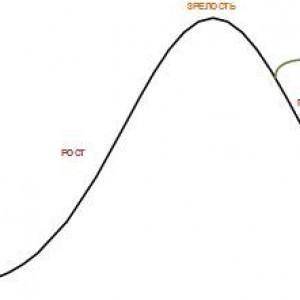 жизненный цикл организации в классическом представлении